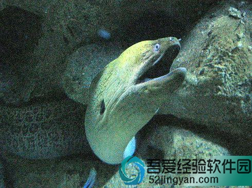 饥饿鲨进化中文安卓破解版分享